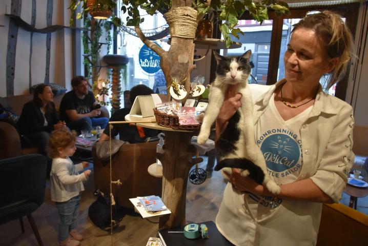 Six chats à adopter ont trouvé refuge au bar à chats Le Déli Cat, en haut de la rue Cauchoise