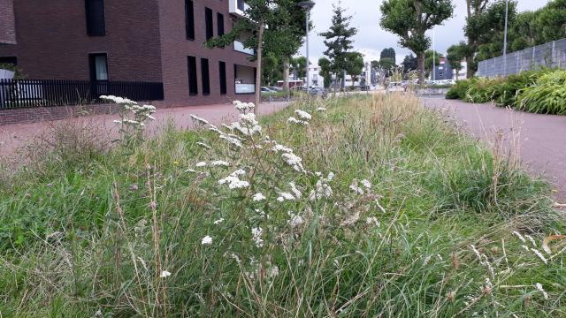 Une prairie sauvage sur le site du centre municipal Charlotte-Delbo témoigne des bienfaits de la pratique des fauches tardives : herbes hautes et fleurs pour des allures de coin de campagne