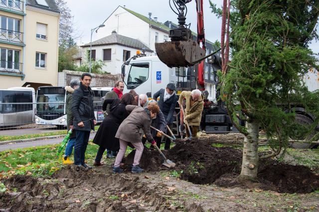 Plantation arbre de l'avenue de la Porte-des-Champs