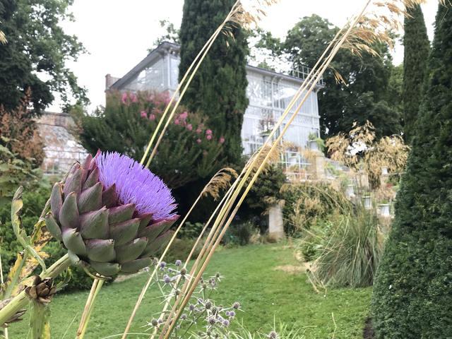Fleur devant la serre à l'horloge du Jardin des plantes