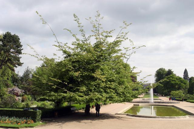 Arbre et bassin du Jardin des Plantes au printemps