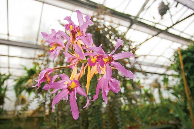 L\'orchidée, reine du Jardin des Plantes | Rouen.fr